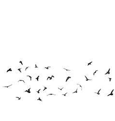 Birds gulls black silhouette on white background vector image vector image