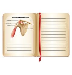 Bones of the shoulder on page vector
