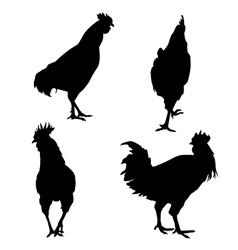 Chicken silhouette set vector image vector image