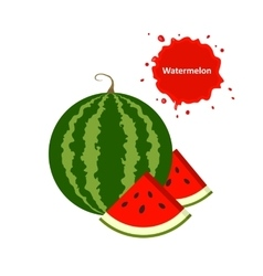 Watermelon and slice vector image