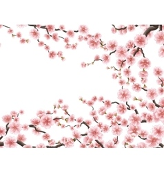 Blossom branches of pink sakura EPS 10 vector image vector image