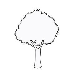 Oak tree plant nature garden outline vector