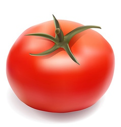 tomato 001 vector image