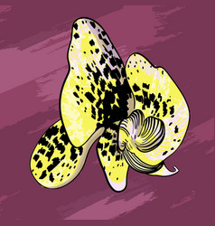 Elegant yellow orchid flower concept vector