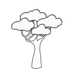 African tree high plant natural botanical outline vector