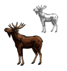 Elk sketch wild animal isolated icon vector