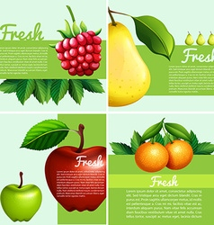 Infographic design with fresh fruits vector