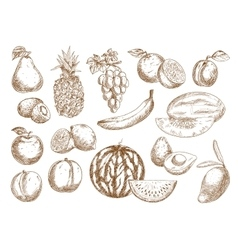 Farm fruits isolated sketches set vector
