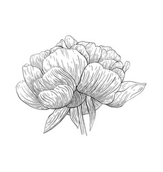flower ink sketch isolated on white background vector image vector image