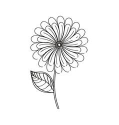 camomile flower decoration sketch vector image