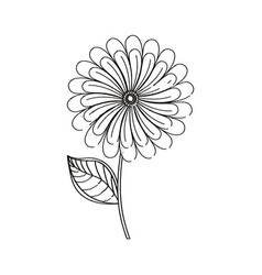 Camomile flower decoration sketch vector