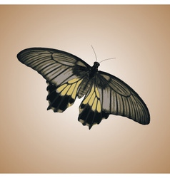 one isolated colorful simple butterfly eps10 vector image