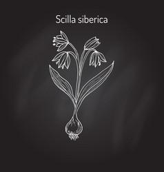 Squill scylla - spring flowe vector