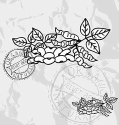Hand drawn velvet beens vector