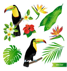 tropical flowers leaves and birds vector image