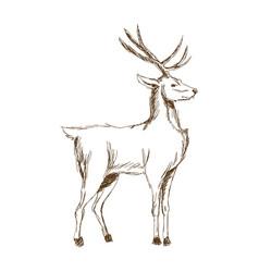 Christmas deer animal antler engraving style vector