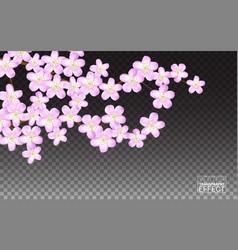 Pink sakura flowers cherry transparent background vector