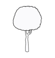 Round tree plant organic stem outline vector