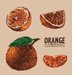 Digital detailed color orange hand drawn vector