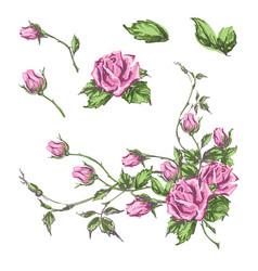 Hand drawn roses vector