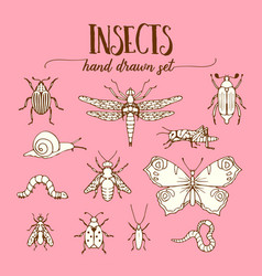 Insects vintage set of hand drawn doodle sketch vector