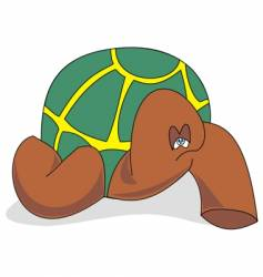 tortue vector image