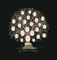 Stylized family tree or pedigree chart template vector