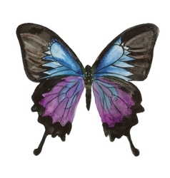 butterfly watercolor painting on white background vector image