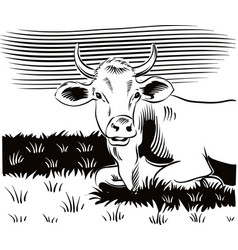 grazing cow lying in a meadow while cud vector image