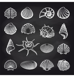 Sea shells on chalckboard vector image