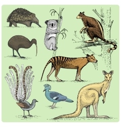 set of australian animals engraved hand drawn vector image