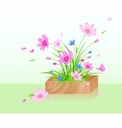 wooden box with red cosmos flowers vector image