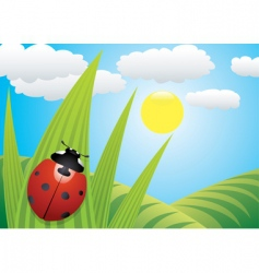 Ladybird on the leaf vector