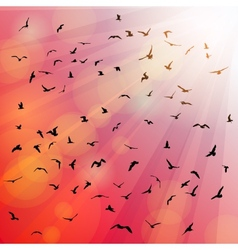 Birds seagulls silhouette in the rays on pink vector