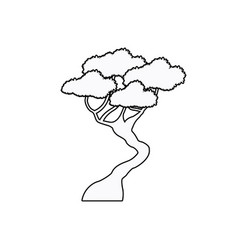 bonsai tree natural plant oriental outline vector image