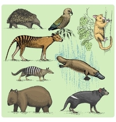 set of australian animals engraved hand drawn vector image vector image