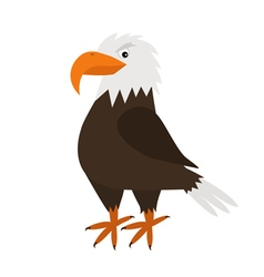 Eagle hawk big beak beautiful exotic bird icon vector