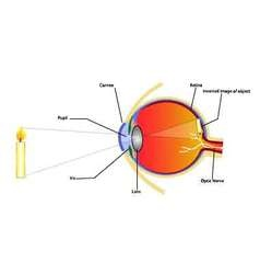Eye and vision vector