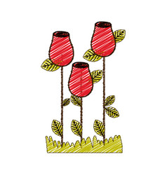 color pencil drawing of rosebuds planted with vector image vector image