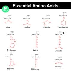 Essential amino acids vector image vector image