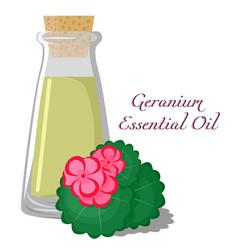 Geranium essential oil vector