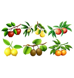 Different kind of fruits on branches vector image
