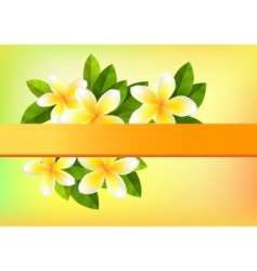frangipani background vector image