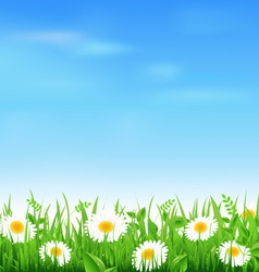 Camomile field vector