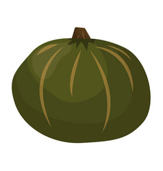 Fresh green pumpkin vegetable isolated vector