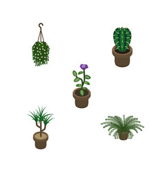 Isometric houseplant set of houseplant flower vector