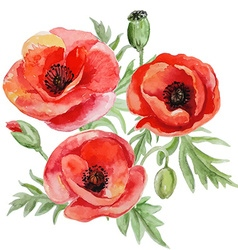 Bouquet of red watercolor poppy flowers vector