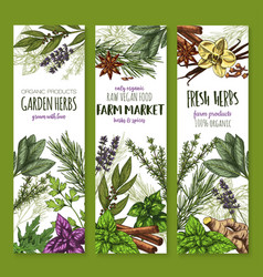 Herb and spice fresh garden food sketch banner vector