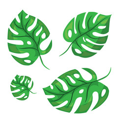 cartoon tropical monstera leaves vector image vector image