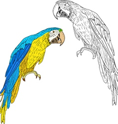 Macaws vector image vector image
